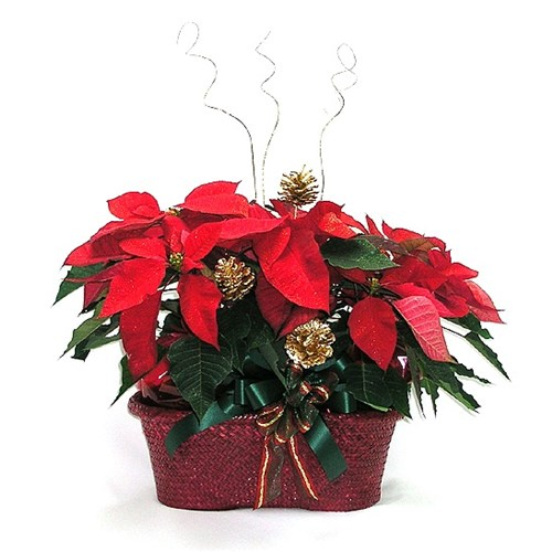 deluxe-poinsettia-basket-with-pinecones