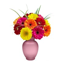 Orange-pink-and-yellow-Gerbera-daisies-in-a-vase