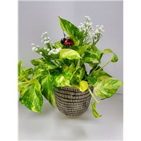6_in_Planter_with_Ladybug_Pick_Style_1_-_$34.99