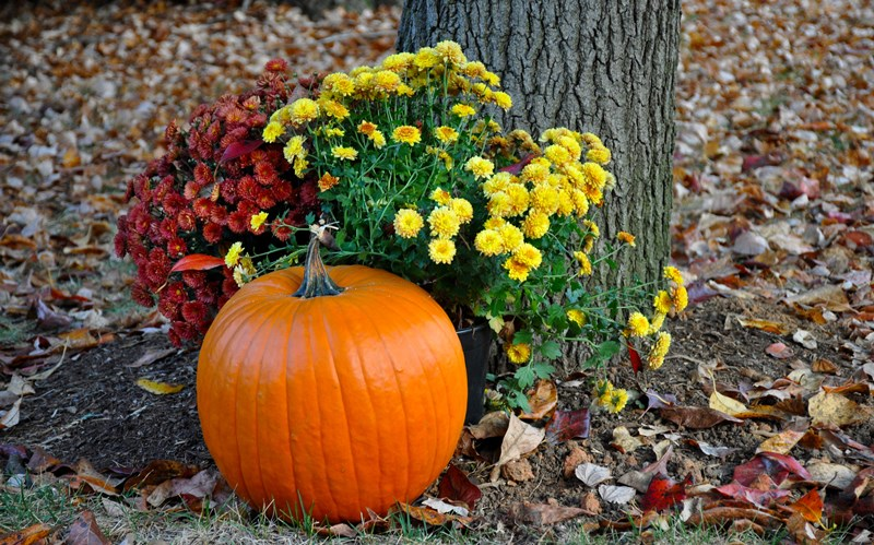 Excited For Autumn Blogs Flowerama Ames 431